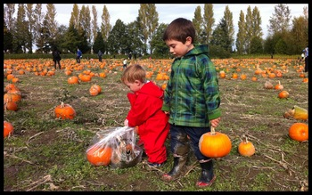 Picking the perfect pumpkin. Or two. October 2010